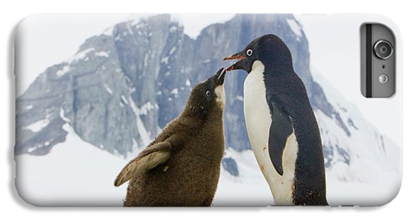 Adelie Penguin Chick Begging For Food IPhone 6 Plus Case by Yva Momatiuk John Eastcott