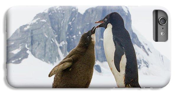 Adelie Penguin Chick Begging For Food IPhone 6 Plus Case by Yva Momatiuk John Eastcott