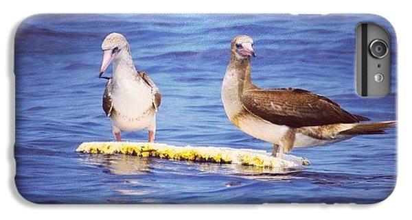 Bestoftheday iPhone 6 Plus Case - Adrift..... #blueplanet #birds #ocean by Brian Governale
