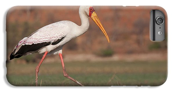 Africa, Botswana, Chobe National Park IPhone 6 Plus Case by Jaynes Gallery