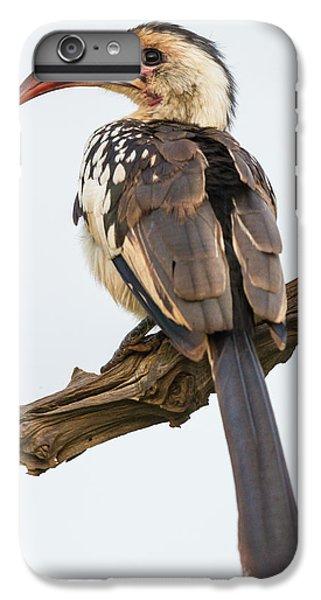 Africa Tanzania Red-billed Hornbill IPhone 6 Plus Case