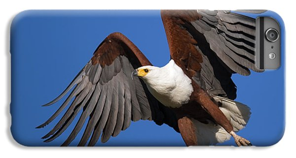 Eagle iPhone 6 Plus Case - African Fish Eagle by Johan Swanepoel