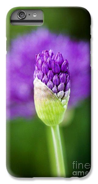 Allium Hollandicum Purple Sensation IPhone 6 Plus Case