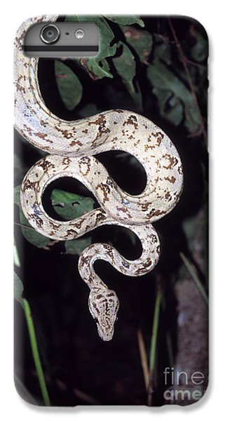 Amazon Tree Boa IPhone 6 Plus Case