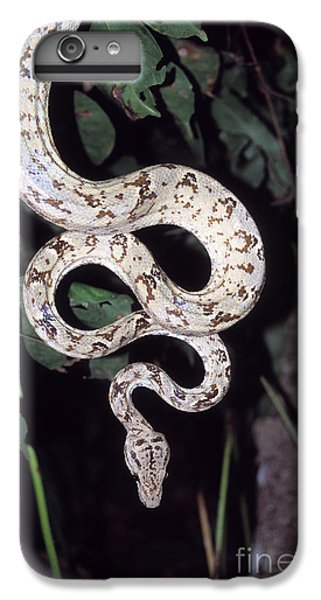 Amazon Tree Boa IPhone 6 Plus Case by James Brunker