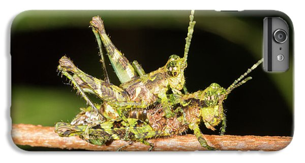 Grasshopper iPhone 6 Plus Case - Amazonian Grasshoppers Mating by Dr Morley Read