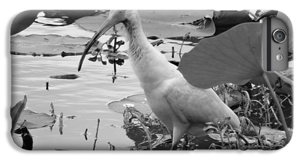 American White Ibis Black And White IPhone 6 Plus Case by Dan Sproul