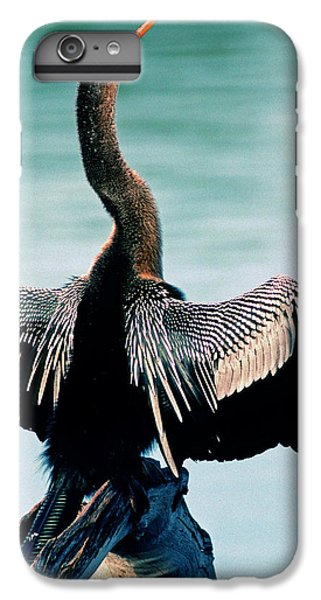 Anhinga Anhinga Anhinga Drying Feathers IPhone 6 Plus Case