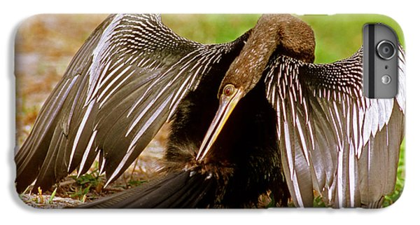 Anhinga Anhinga Anhinga Preening IPhone 6 Plus Case by Millard H. Sharp