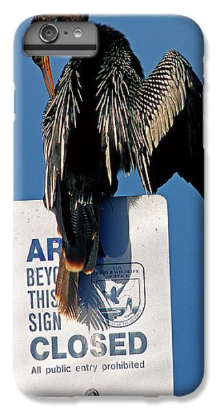 Anhinga Perched On A Signpost IPhone 6 Plus Case