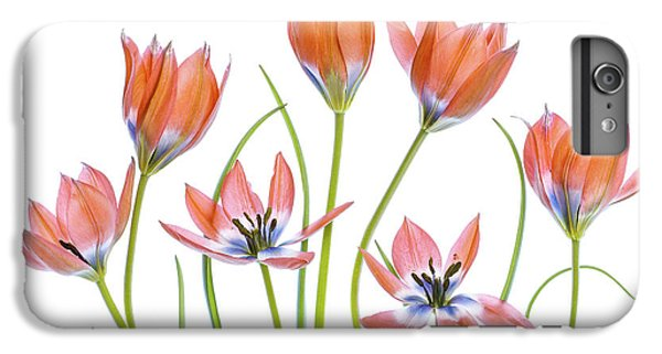 Tulip iPhone 6 Plus Case - Apricot Tulips by Mandy Disher