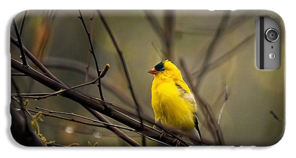 Finch iPhone 6 Plus Case - April Showers In Square Format by Lois Bryan