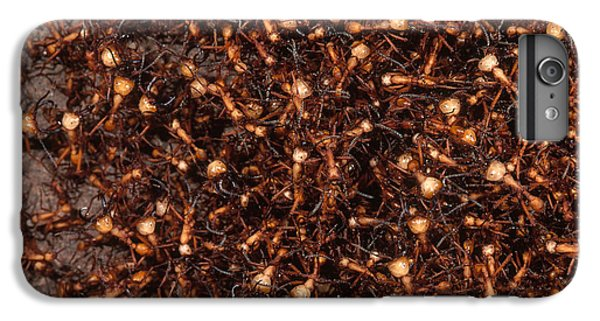 Army Ants IPhone 6 Plus Case by Art Wolfe