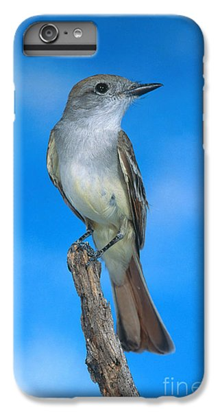 Ash-throated Flycatcher IPhone 6 Plus Case by Anthony Mercieca