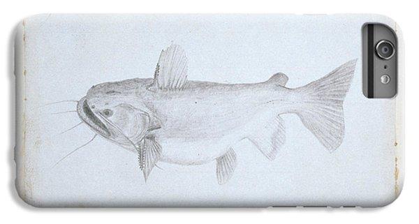 Catfish iPhone 6 Plus Case - Asterophysus Batrachus by Natural History Museum, London