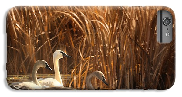 Swan iPhone 6 Plus Case - Autumn Light- Trumpeter Swans by Aaron Blaise