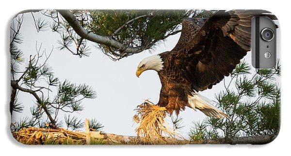 Phoenix iPhone 6 Plus Case - Bald Eagle Building Nest by Everet Regal