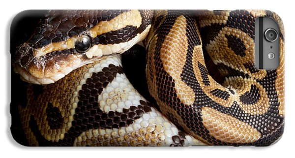 Ball Python Python Regius IPhone 6 Plus Case by David Kenny