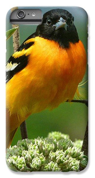 Oriole iPhone 6 Plus Case - Baltimore Oriole by Bruce Morrison