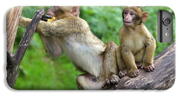 Barbary Macaques IPhone 6 Plus Case by Nigel Downer