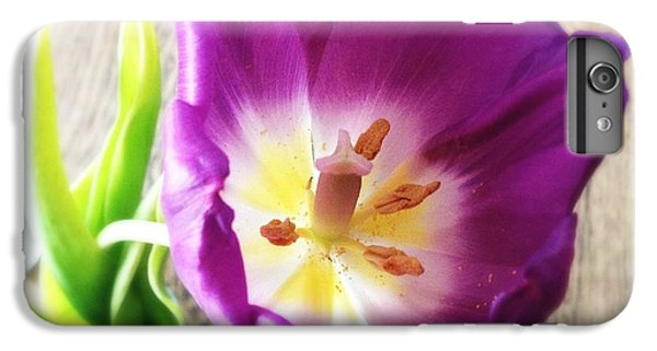 Beautiful iPhone 6 Plus Case - Beautiful Purple Flower From Above by Matthias Hauser