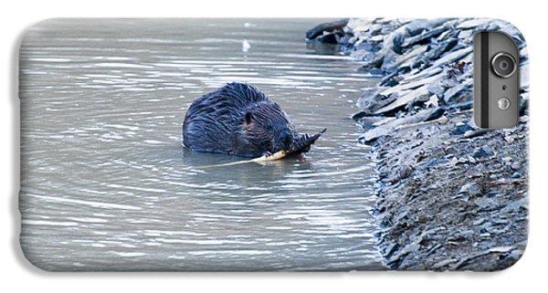 Beaver Chews On Stick IPhone 6 Plus Case by Chris Flees
