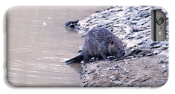Beaver On Dry Land IPhone 6 Plus Case by Chris Flees