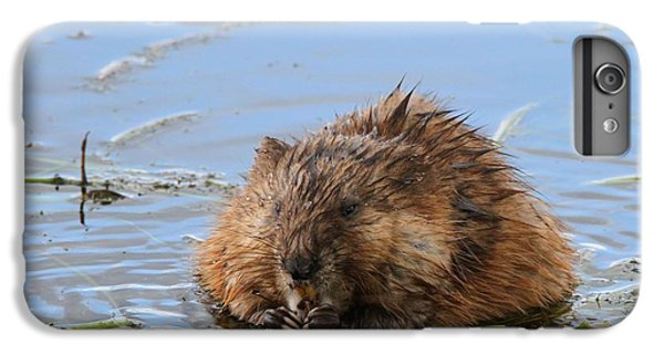 Beaver Portrait IPhone 6 Plus Case by Dan Sproul