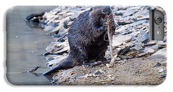Beaver Sharpens Stick IPhone 6 Plus Case by Chris Flees