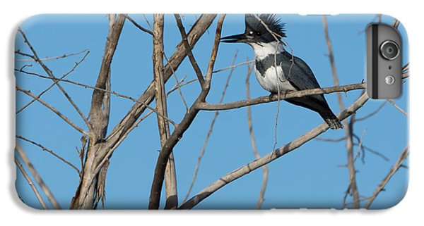 Belted Kingfisher 4 IPhone 6 Plus Case by Ernie Echols