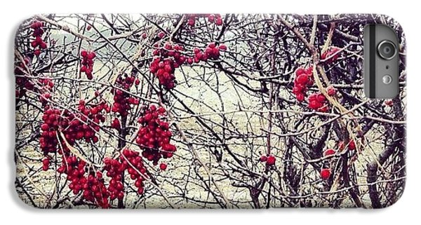 Bright iPhone 6 Plus Case - Berries In The Hedgerow by Nic Squirrell