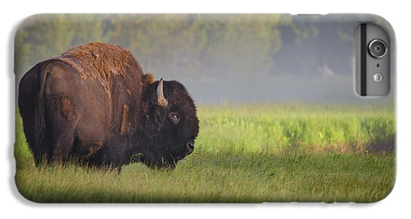 Bison In Morning Light IPhone 6 Plus Case