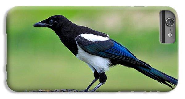 Black Billed Magpie IPhone 6 Plus Case