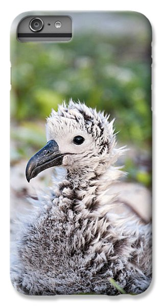 Albatross iPhone 6 Plus Case - Black-footed Albatross / Phoebastria by Daisy Gilardini