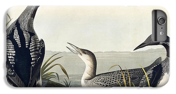 Black Throated Diver  IPhone 6 Plus Case by John James Audubon