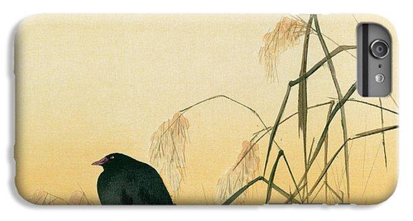 Blackbird iPhone 6 Plus Case - Blackbird by Japanese School