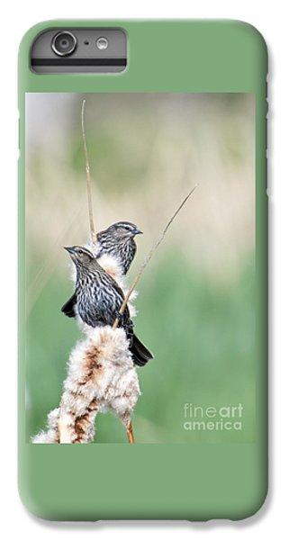 Blackbird Pair IPhone 6 Plus Case