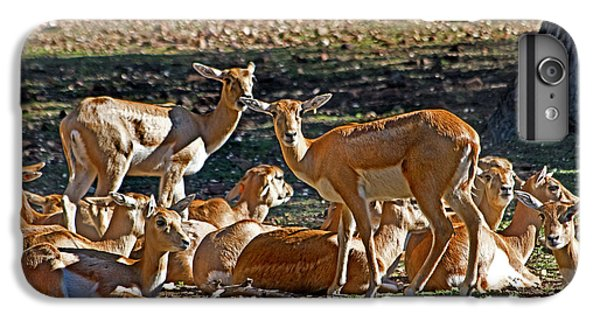 Blackbuck Female And Fawns IPhone 6 Plus Case