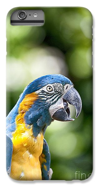 Blue And Gold Macaw V2 IPhone 6 Plus Case by Douglas Barnard