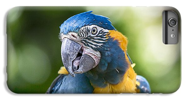 Blue And Gold Macaw V3 IPhone 6 Plus Case by Douglas Barnard