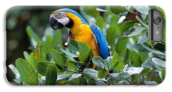 Blue And Yellow Macaw IPhone 6 Plus Case by Art Wolfe