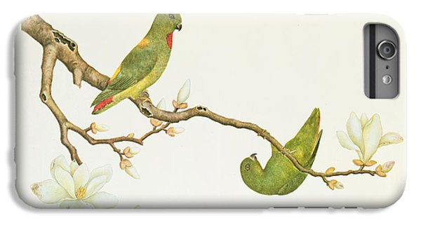 Parakeet iPhone 6 Plus Case - Blue Crowned Parakeet Hannging On A Magnolia Branch by Chinese School