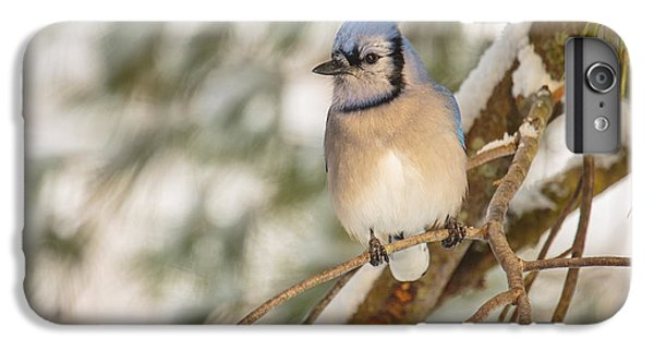 Bluejay iPhone 6 Plus Case - Blue Jay by Everet Regal
