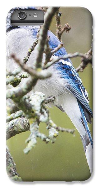 Blue Jay In The Rain IPhone 6 Plus Case by Ricky L Jones