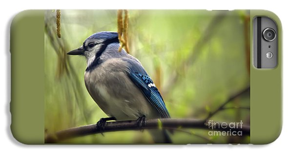 Bluejay iPhone 6 Plus Case - Blue Jay On A Misty Spring Day by Lois Bryan