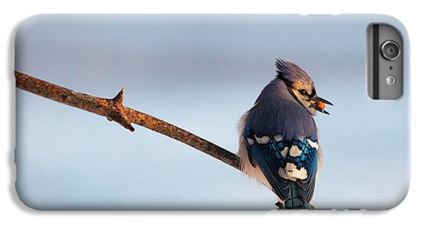 Bluejay iPhone 6 Plus Case - Blue Jay With Nuts by Everet Regal