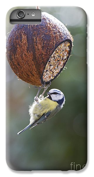 Titmouse iPhone 6 Plus Case - Blue Tit Feeding by Tim Gainey