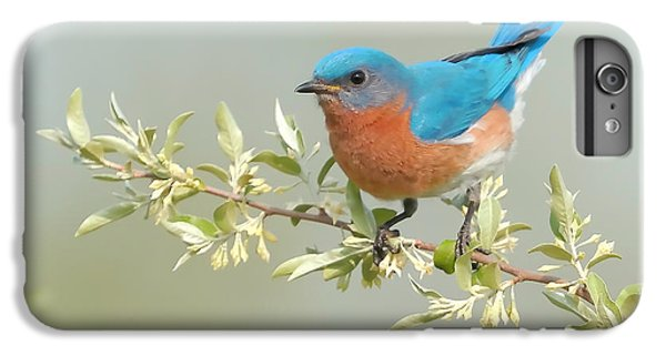 Bluebird Floral IPhone 6 Plus Case by William Jobes