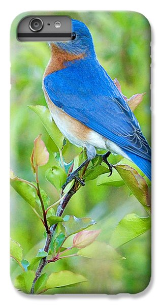Bluebird Joy IPhone 6 Plus Case by William Jobes