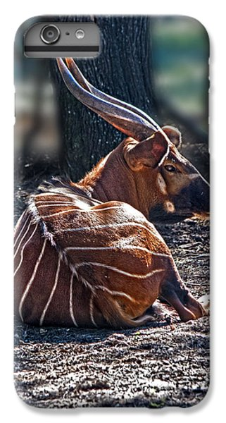 Bongo IPhone 6 Plus Case